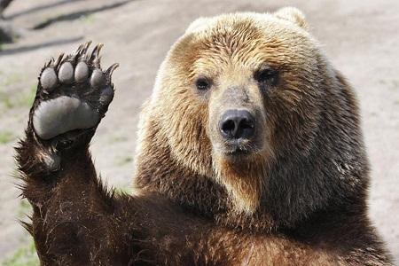 """Слушаем английскую речь: """"I cannot bear it..."""""""
